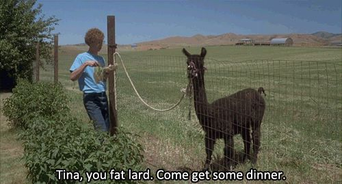 Napoleon Dynamite | 32 Movie Quotes Guaranteed To Make You Laugh Every Time