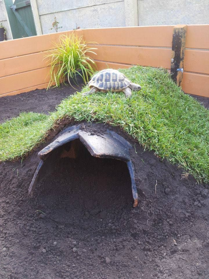 Sod draped over an outside tortoise burrow