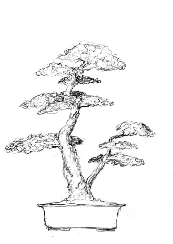 20 best images about bonsai trees on pinterest