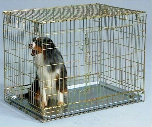 37 Best Wire Dog Crates Images On Pinterest