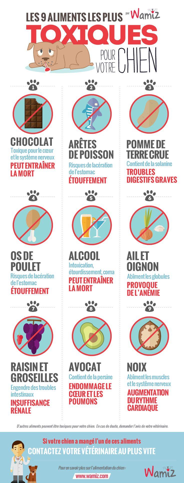 Infographie aliments toxiques chien