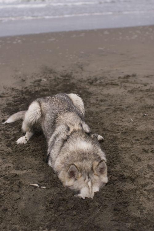 This looks like my dog!