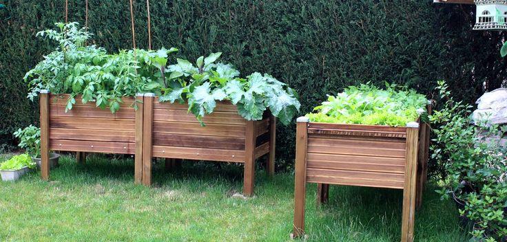 Les potagers sur pieds de Papycool sont prévus pour cultiver toute sorte de légumes et plantes : légumes feuilles, légumes fruits, légumes racines et tubercules, légumes bulbeux... Installés à proximité de votre lieu d'habitation les potagers sur pieds peuvent contenir plusieurs types de plantations. Quoi de mieux que de cultiver ces propres légumes de façon naturelle. Ces bacs potagers surélevés forment également une protection contre les limaces et autres nuisibles pour les jardins.