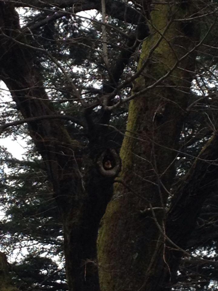 Piccolo scoiattolo che aspetta la pappa !!