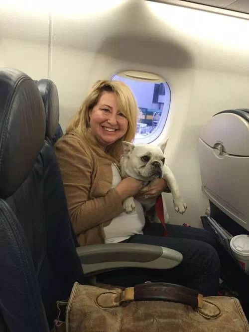 OK. So. First. Emotional support animals are not a scam. Lots of highly functioning people like me derive a huge amount of comfort from emotional support dogs. They can make the difference between medicating or not medicating, or flying or not flying. That's why it is federal law that airlines have to accommodate emotional support animals. Second, there is a difference between a system that can be scammed and a system that is inherently a scam.