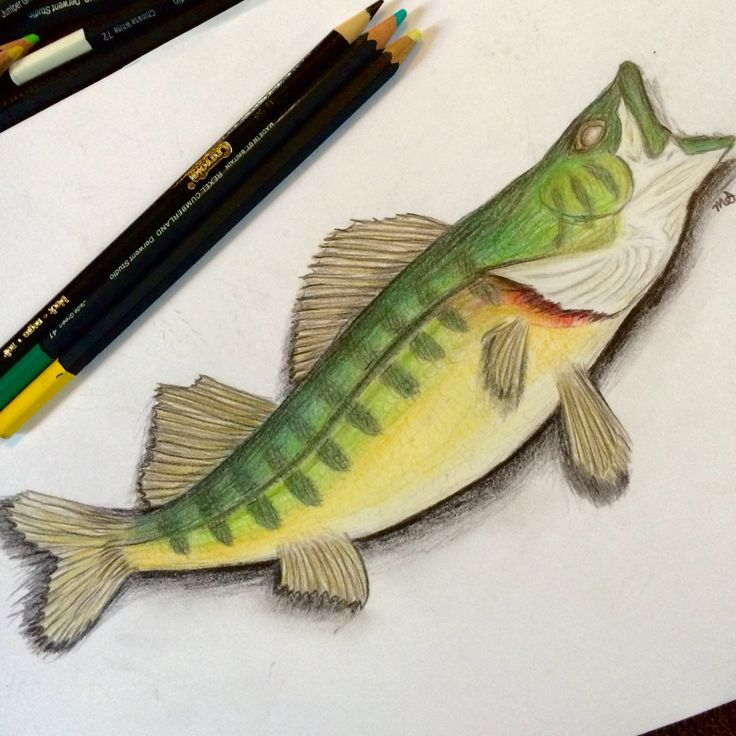 It's just a picture of Astounding Realistic Fish Drawing
