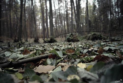 by ♡Gosia M more: http://xgosia-mx.tumblr.com   &   https://www.facebook.com/gosiamphoto  #gosiam #forest #wood #dark