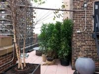 New York Plantings Irrigation and Landscape Lighting is reminding to make drip irrigation