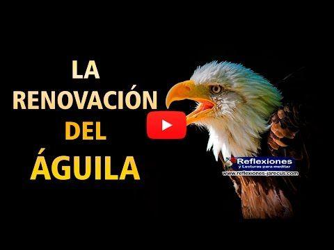 La renovación del águila (Vídeo reflexión) - Reflexiones y Lecturas para Meditar