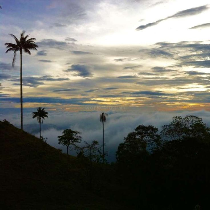Return to nature! Help on our eco finca in the heart of the Colombian coffee region - workaway.info