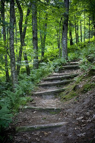trail at wildcat mountain state park by mizzougrad001, via Flickr