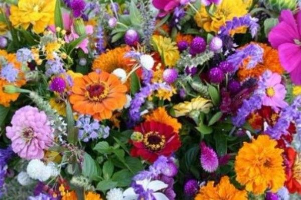The 10 Most Popular Flowers Grown in the UK  Have you planted any of these in your garden?  #FlowersInTheDirt #flowersmakemehappy #gardenchat