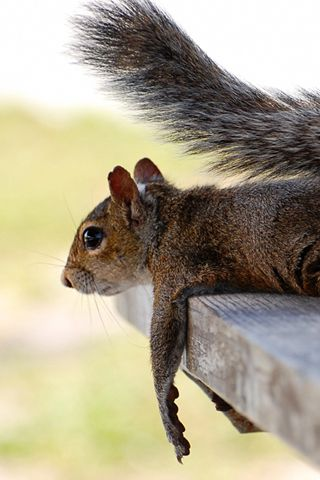 Pssst, yeah, you, bring those peanuts over here, I won't bite, I promise, you give me peanuts and I will give you lots of CUTE poses for pics to put on FB!