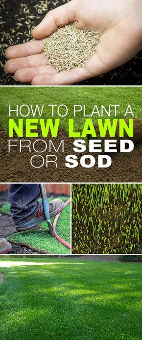 How To Plant a New Lawn From Seed or Sod! • Starting a new lawn from seed or sod isn't complicated, it's just a bit of elbow grease and some simple steps. Click thru to see the steps and tips! #newlawn #planting #tips #care #prep #grass #sod #seed #thegardenglove