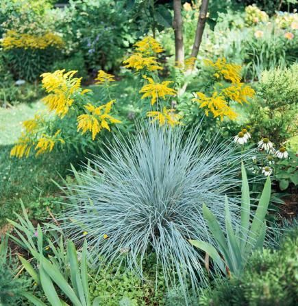 Best ornamental grasses for midwest gardens gardens for Ornamental grass with blue flowers
