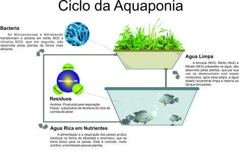 criação de peixes tilapia