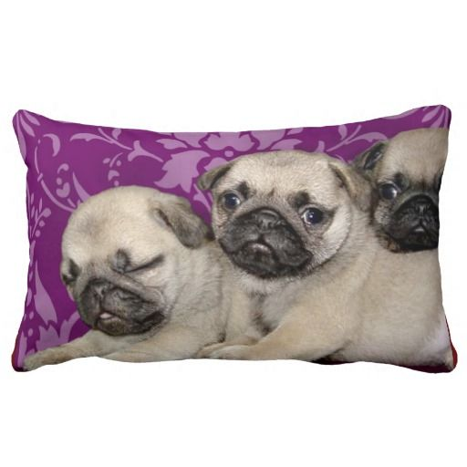 @@@Karri Best price          Pug puppies throw pillows           Pug puppies throw pillows Yes I can say you are on right site we just collected best shopping store that haveThis Deals          Pug puppies throw pillows please follow the link to see fully reviews...Cleck Hot Deals >>> http://www.zazzle.com/pug_puppies_throw_pillows-189879451572719398?rf=238627982471231924&zbar=1&tc=terrest