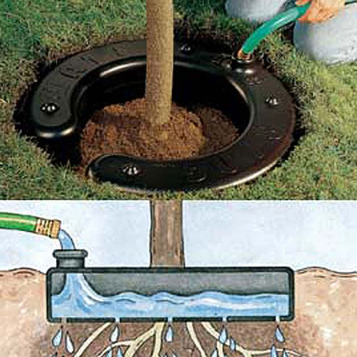 Water Ring  Check out more ideas like this :https://www.yardmasterz.com #vegetablegardendesign