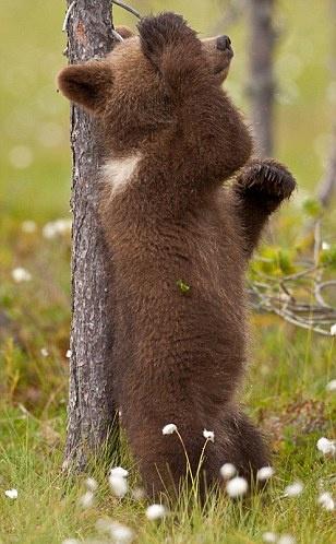 Hide and seekGotta Scratch, Animal Kingdom, Peek A Boos, Pets Animal, Plays Hiding, Animal Photos