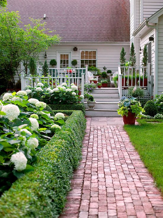 boxwood hedge, hydrangeas, brick pathway