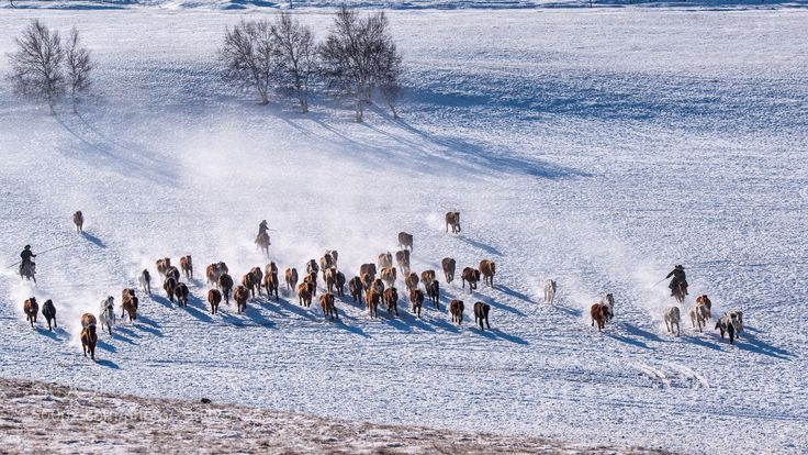Ten thousand steeds gallop (Laojing / CHINA) #nikon D3X #animals #photo #nature