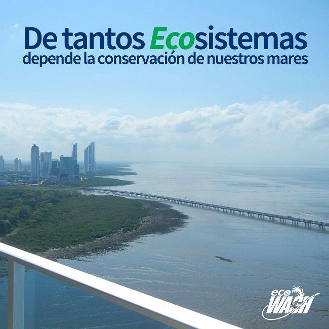 Hoy es un día que nos recuerda del esfuerzo de cada uno de nosotros para conservar los mares #diamundialdelosmares . #mares #ecologia #ecosistema #conservación  #panama #pty #pty507 #chamosenpanamá #panamacity #panamagram #venezolanospty #panamaventas #mipanama #ecowash_pty