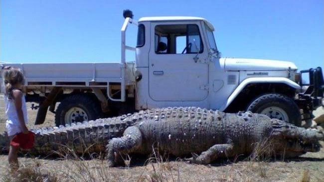 Gustave+The+Killer+Crocodile   The GIANT CROCODILE which was caught in the Philippine Islands ...
