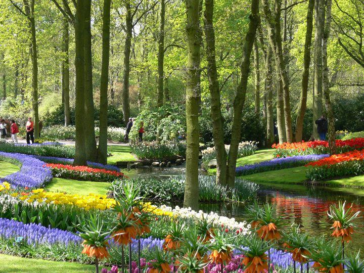 Best 25 Tulip Garden Amsterdam Ideas Only On Pinterest Dutch Tulip Flower Pictures Holland