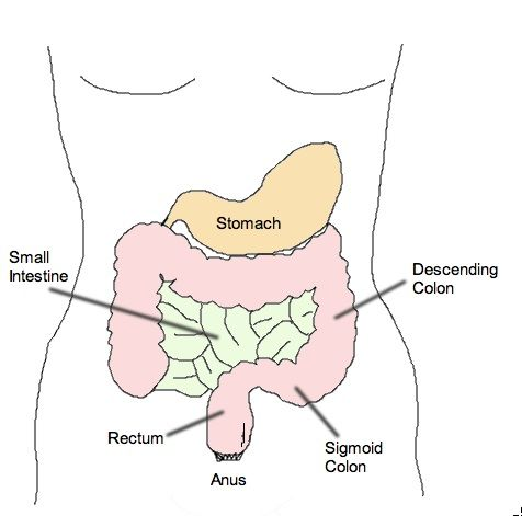 Fecal impaction can be a frustrating and sometimes dangerous complication of constipation. On this page, we discuss what this condition is exactly, and the main disimpaction methods in front of you.