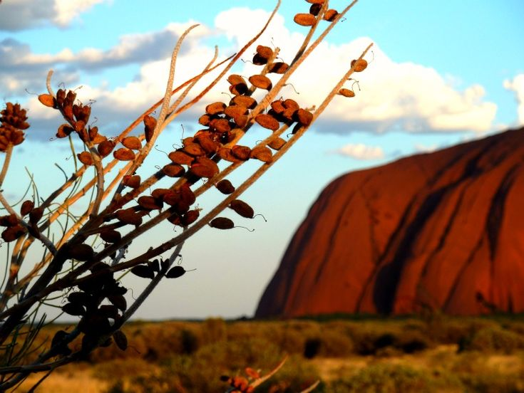 Uluru - Australia's red centre (Ayers Rock)