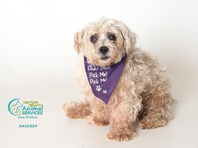 Pin By Tasha Bradshaw On Always Adopt Dog Adoption Animal