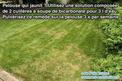 Votre pelouse a jauni par endroit et vous ne savez pas quoi faire ? Pour régler ce souci naturellement sans produit chimique, le remède est de pulvériser de l'eau mélangée à du bicarbonate sur votre pelouse :-) Découvrez l'astuce ici : http://www.comment-economiser.fr/pelouse-jaunit-que-faire.html?utm_content=buffer3071c&utm_medium=social&utm_source=pinterest.com&utm_campaign=buffer
