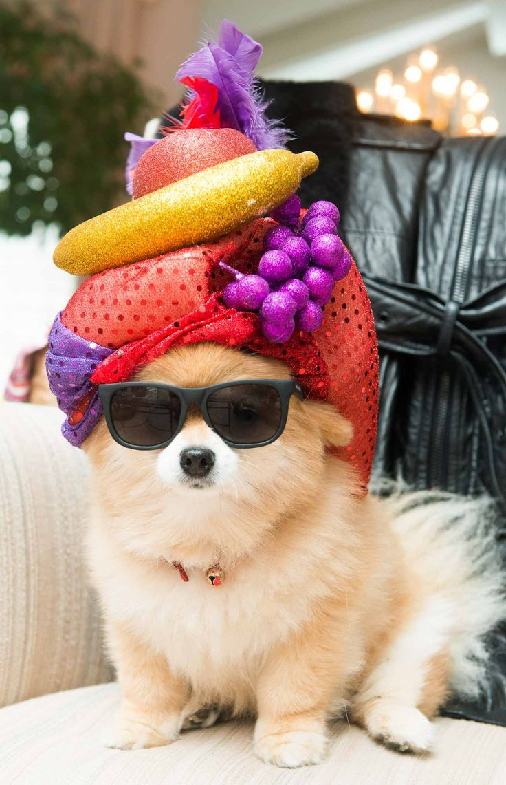this dog is just too cool