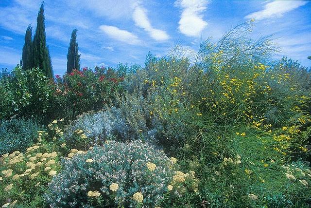 Gardens of Olivier Filippi, Meze, France