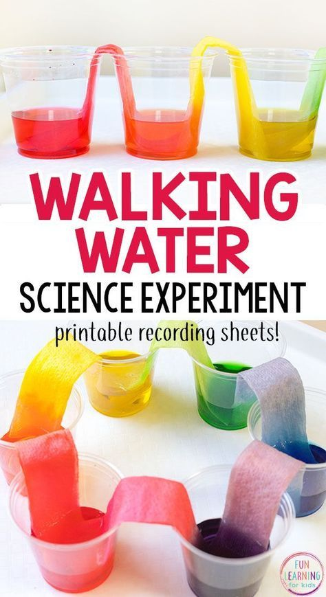 rainbow walking water science experiment for kids creative science experiments kids water. Black Bedroom Furniture Sets. Home Design Ideas