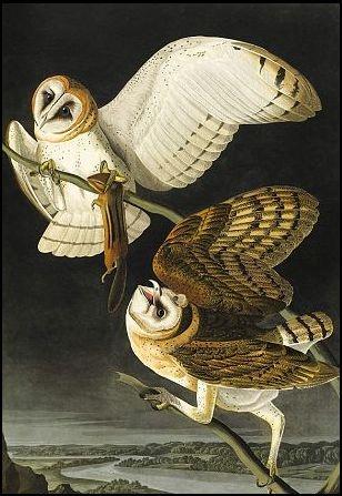 45 Best Owl Paintings Drawings Art Work Images On