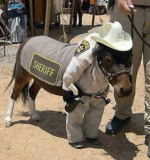 We're looking for a new sheriff in town! Is it you? Join today!  Digitaldowns