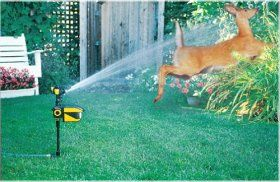 Scarecrow Sprinkler. Motion activated