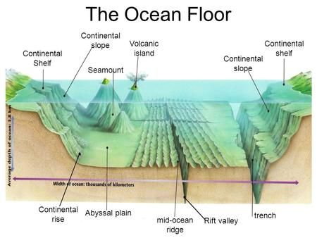 Continental Shelf Continental shelf Continental slope Continental slope Seamount Volcanic island Continental rise Abyssal plain mid-ocean ridge Rift valley.