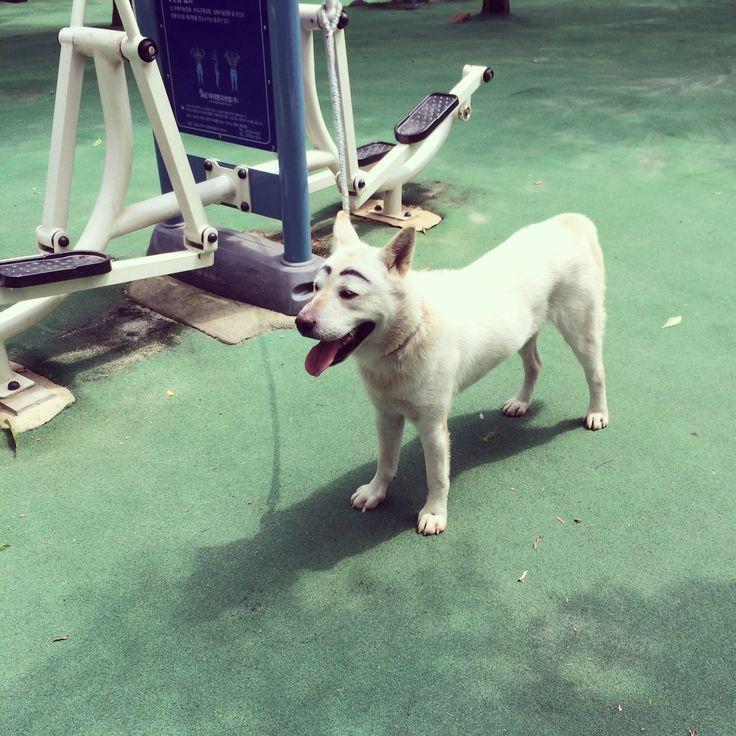 귀여운 눈썹 개..ㅋ