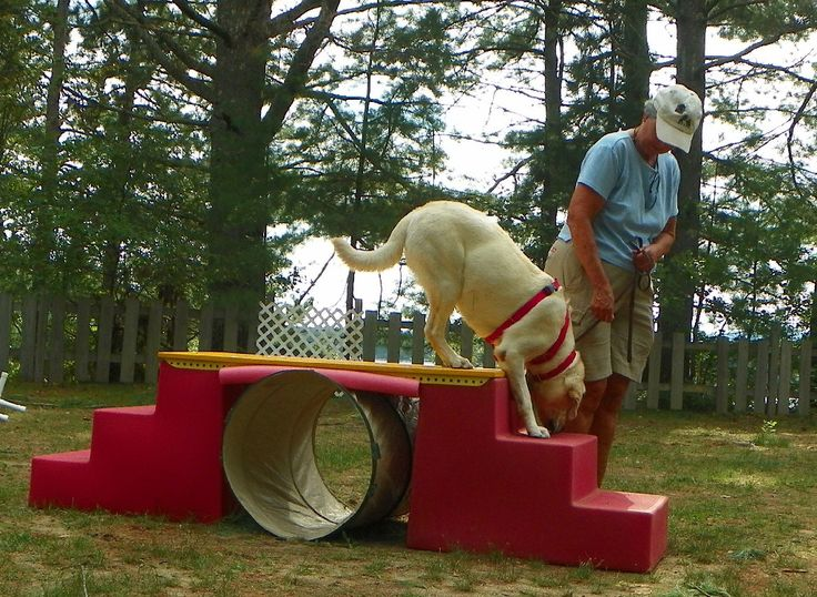 Obstacle Skills- 'Wag It Games' version of slower agility with different and creative obstacles.  Speed is not important and treats and toys may be used.