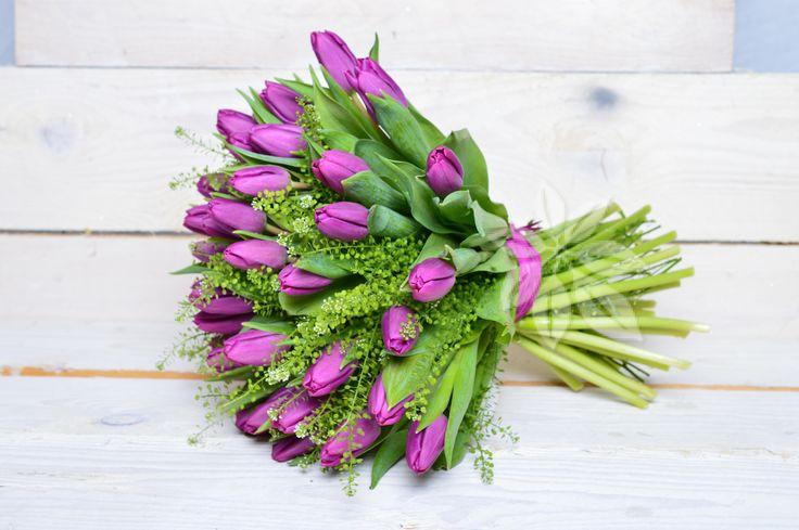 FIALOVÉ TULIPÁNY   Flora-květiny