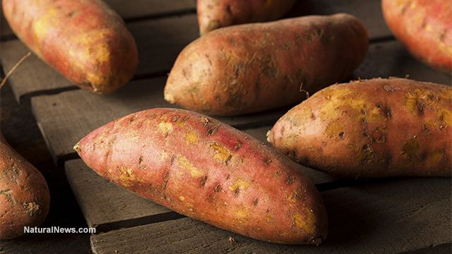 As GMOs fail, Mozambique farmers turn to natural sweet potatoes to improve nutrition, yields and income