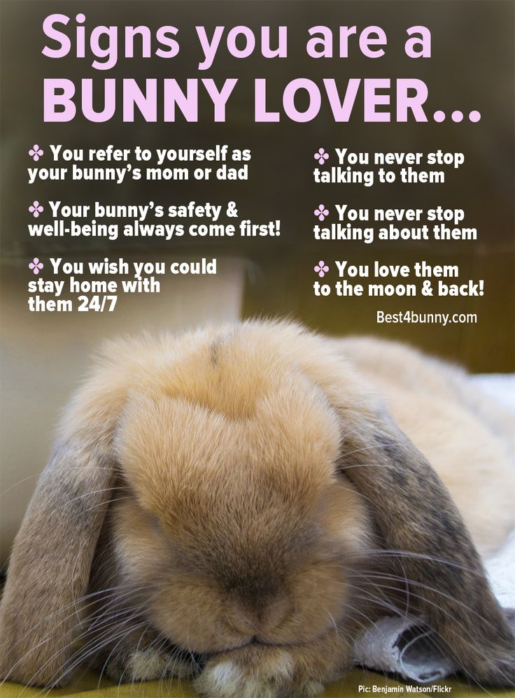 Signs you are a bunny lover... www.best4bunny.com