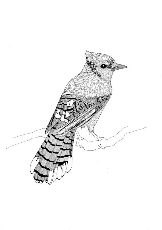 best 25  bird coloring pages ideas that you will like on
