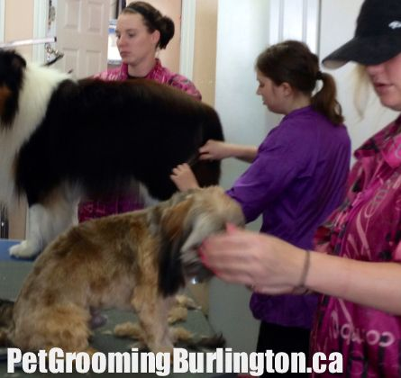 46 best stephanies pet grooming services images on pinterest pet dog grooming in our shop in burlington solutioingenieria Gallery
