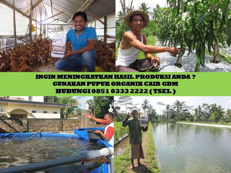 GDM merupakan Pupuk Bio Organik Cair yang di hasilkan dari bahan-bahan organik dan bakteri yang diperlukan oleh tanaman. Berikut ini adalah bahan-bahan utama yang diperlukan dalam pembuatan GDM : Kotoran ternak – Tumbuhan – Ikan - Tulang-tulang ternak - Limbah organik Rumput laut -- Darah hewan - Minyak hewani – Alga - Bakteri Informasi detil  HUBUNGI : 0851 0333 2222