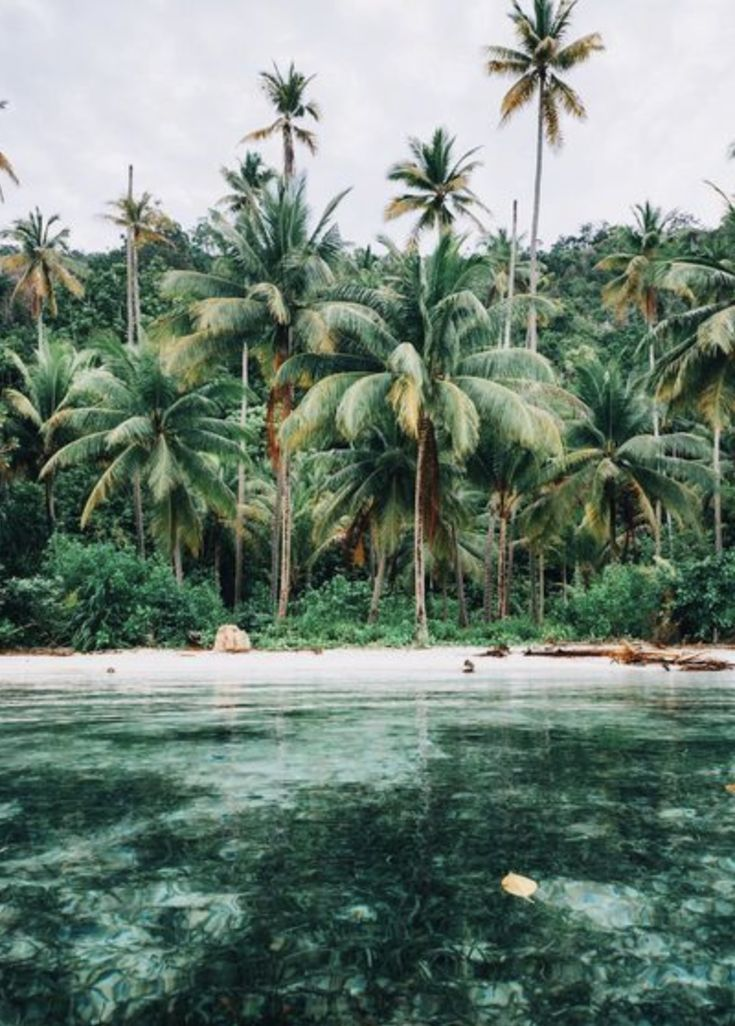tropical / palm trees / travel / vacation Pinterest ...