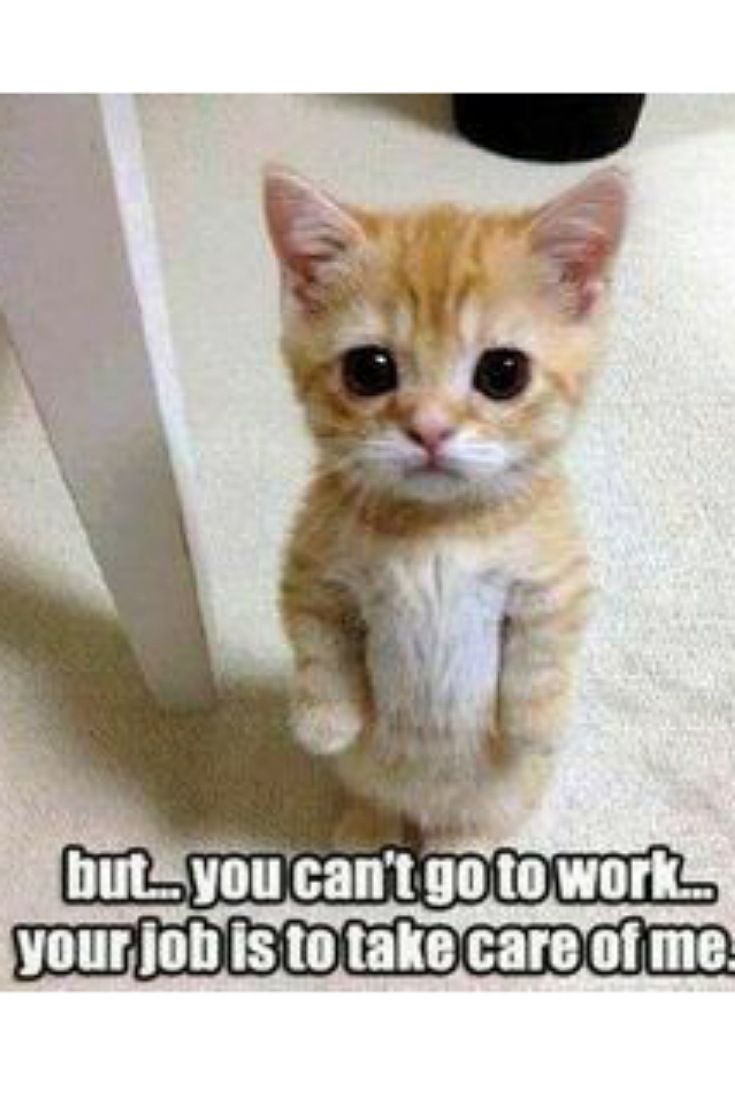Angry Cute Kitten Funny Animal Pictures Cute Animals Cute Animal Pictures