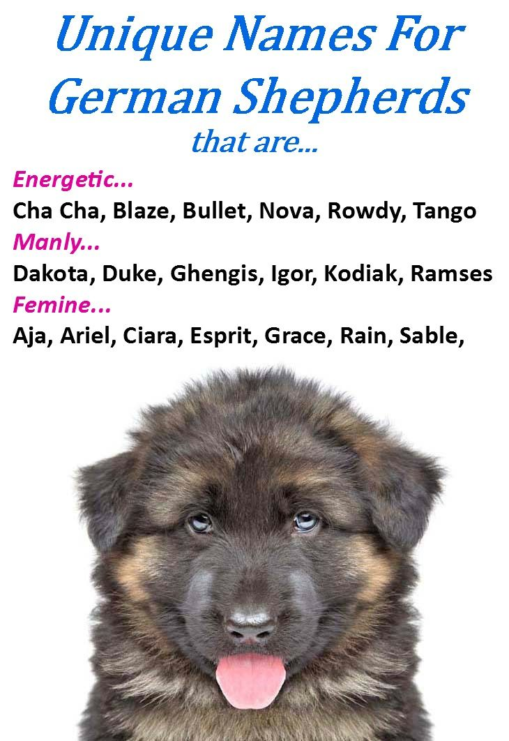 Good Dog Names For German Shepherds
